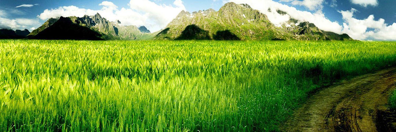 قالب زیبای جاده سبز
