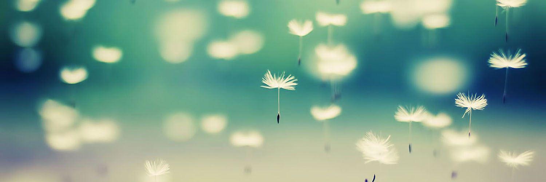 قالب وبلاگ قاصدک , گل, قالب وبلاگ قاصدک بلاگفا میهن بلاگ و پرشین بلاگ, قاصدک, عاشقانه, طبیعت, رمانتیک