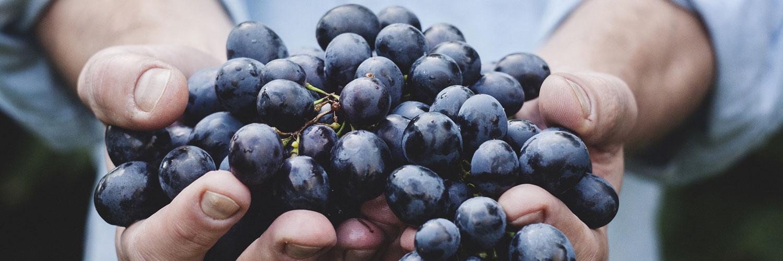 قالب وبلاگ خوشه انگور , میوه, قالب وبلاگ خوشه انگور, انگور