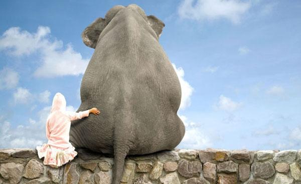 قالب زیبای دختر و فیل