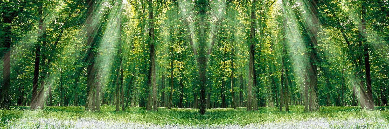 قالب زیبای درخت های جنگل