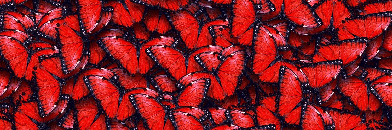 قالب وبلاگ پروانه های قرمز , کد قالب پروانه بلاگفا, قالب وبلاگ پروانه, قالب وبلاگ بلاگفا پروانه, قالب شمع و پروانه بلاگفا, قالب پروانه ها, قالب پروانه صورتی, قالب پروانه برای وبلاگ, قالب پروانه برای بلاگفا, قالب پروانه ای برای وبلاگ, پروانه