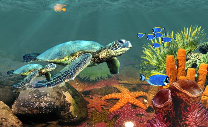 قالب زیبای زیر دریا
