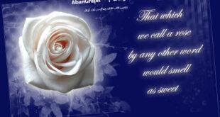 قالب عاشقانه گل رز بلاکفا