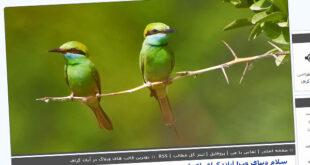 قالب پرنده , قالب درباره پرنده, قالب پرنده میهن بلاگ, قالب پرنده پرشین بلاگ, قالب پرنده بلاگفا, قالب پرنده, قالب با موضوع پرنده, طبیعت, درخت, حیوانات, پرنده