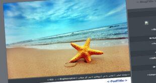 قالب ستاره دریایی , قالب ستاره دریایی میهن بلاگ, قالب ستاره دریایی پرشین بلاگ, قالب ستاره دریایی بلاگفا, قالب ستاره دریایی, قالب درباره ستاره دریایی, قالب با موضوع ستاره دریایی, ستاره دریایی, ساحل, دریا, آب