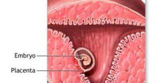 حاملگی پوچ چیست و چگونه است؟ , چیست, چگونه, پوچ, بارداری