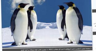 قالب پنگوئن , کوه, قالب درباره پنگوئن, قالب پنگوئن میهن بلاگ, قالب پنگوئن پرشین بلاگ, قالب پنگوئن بلاگفا, قالب پنگوئن, قالب با موضوع پنگوئن, زمستان, پنگوئن, برف