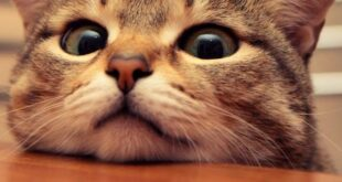 قالب وبلاگ گربه گرسنه , گربه, کد قالب گربه, قالب وبلاگ گربه ناز, قالب وبلاگ گربه گرسنه, قالب وبلاگ گربه ای, قالب وبلاگ گربه, قالب وبلاگ با طرح گربه, قالب های گربه, قالب گربه بلاگفا, قالب گربه برای وبلاگ, قالب گربه