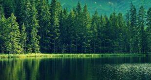 قالب وبلاگ درخت های جنگل , قالب وبلاگ درخت های جنگل, قالب وبلاگ درخت, قالب طبیعت و محیط زیست, قالب جنگلی, قالب جنگل
